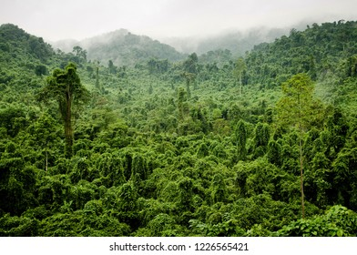 Jungle view from helicopter