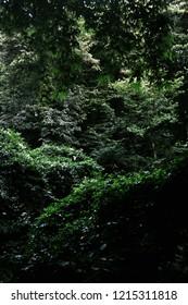 Jungle From Yalova Turkey 2014