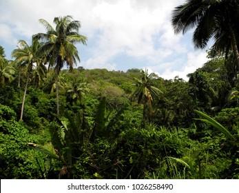 Jungles of Phuket island