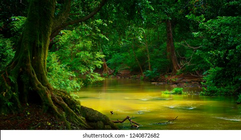 Jungles of Southeast Asia with river