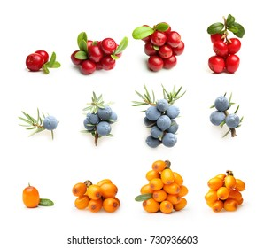 Juniper berries, cowberry and sea buckthorn isolated on white background.