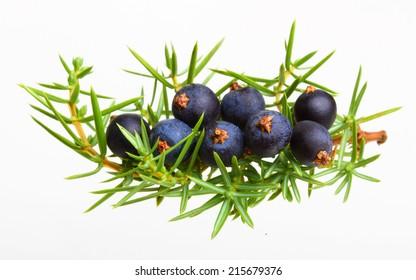 Juniper berries isolated on white