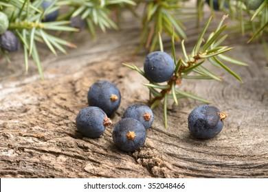 Juniper berries on vintage wooden background