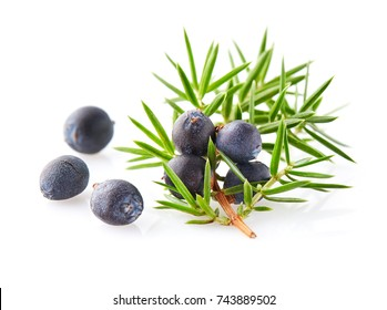 Juniper berry on a white background
