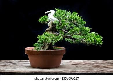 Juniper bonsai twist trunk