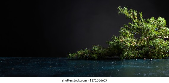 Juniper branch with berries on a black background. Copy space for your text.