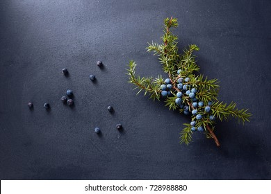 Juniper branch with fresh berries