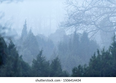 Juniper bushes and bare tree on misty morning in winter.