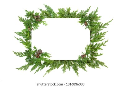 Juniper fir & cedar cypress leylandii winter greenery border on white with copy space. Traditional natural flora for the Christmas & New Year season. Top view, flat lay.