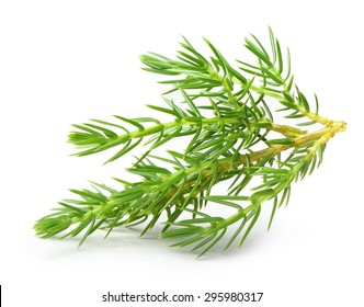 Juniper isolated on white background.
