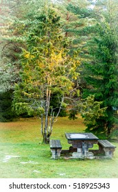 Juniper tree and the table in next to spurce tree