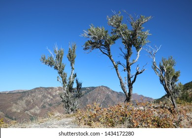 Juniper trees mark the lower tree line in the foothills of the Wasatch mountains near Salt Lake City, Utah