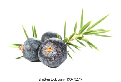 Juniperus berries juniper leaves