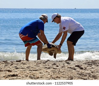 JUNO BEACH, FL/USA - JUNE 27, 2018:  Volunteers from the Loggerhead Marinelife Center in Juno Beach, Florida, release a loggerhead sea turtle into the ocean, after taking care of it for months.