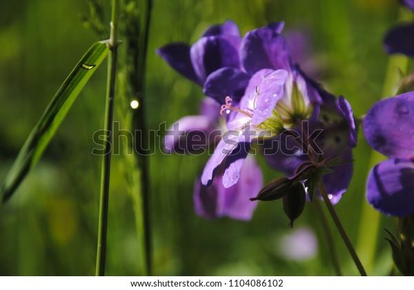 Jura flowers in spring, sunny day