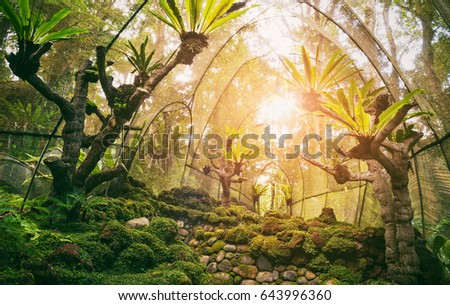 Jurassic ancient trees in