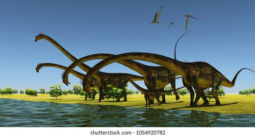 Jurassic Barosaurus Dinosaurs 3D illustration - A herd of Barosaurus dinosaurs bend their long necks to drink from a river as a flock of Pteranodons fly over.