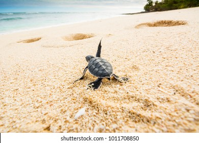 Just born turtles instinctively go towards the sea to find a safe place that allows them to survive