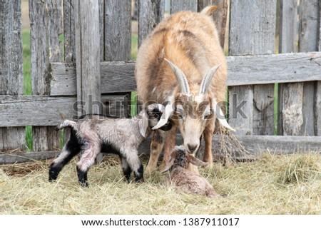 just-born-twin-kids-on-450w-1387911017.j