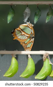 Just Emerged Butterfly