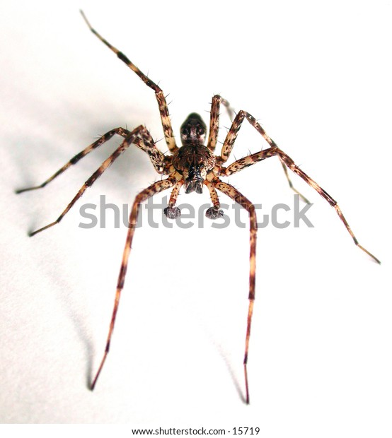 Just a interesting spider.