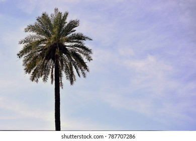 Just a palm