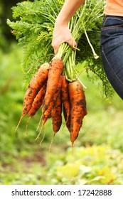 Just picked fresh organic carrot