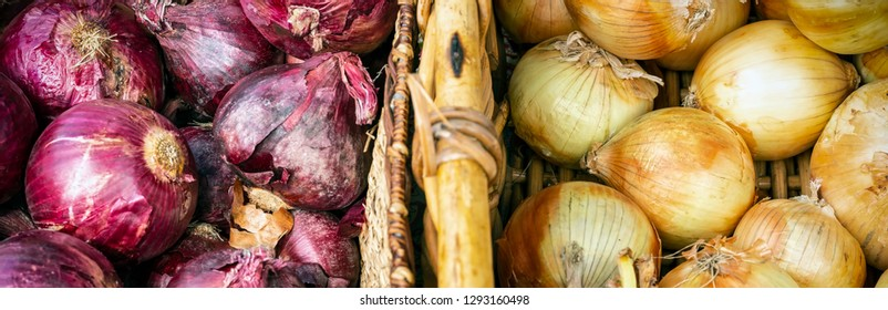 Just picked rippened onions in wooden crates ready to eat.