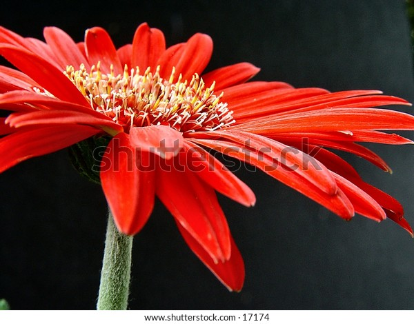 Just a pretty red flower