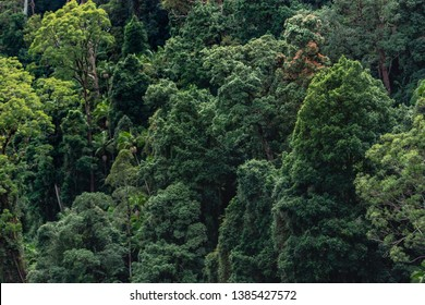 just tree tropical forest jungle nature pattern from sky Australia Springbrook