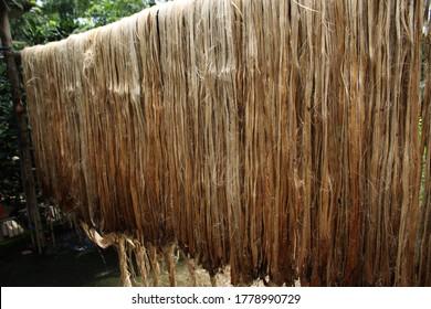 Jute fiber drying on bamboo stick