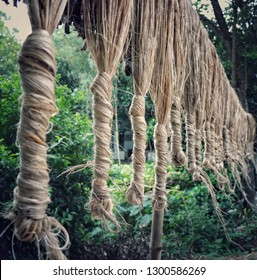 Jute is second only to cotton in world's production of textile fibers.
