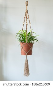 A Jute Twine macrame plant hanger is holding a Spider Plant. (Chlorophytum Comosum) The whole hanger is in view.