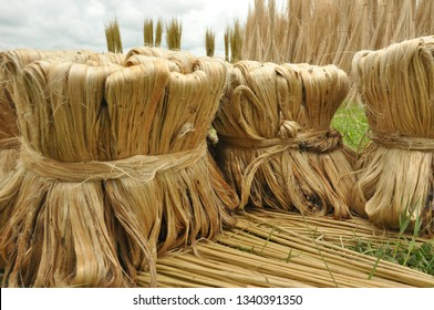 Jute vegetable fiber