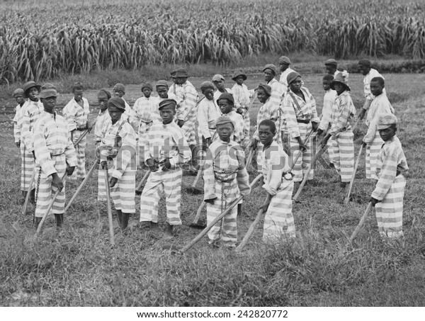 Juvenile convicts at work in the fields in Southern chain gang. Southern jails made money leasing convicts for forced labor in the Jim Crow South. Circa. 1903