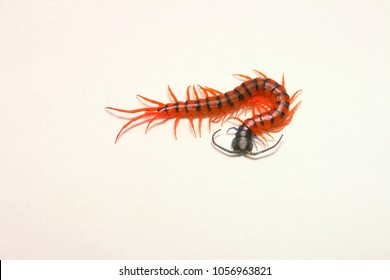 Scolopendra Subspinipes Images, Stock Photos & Vectors