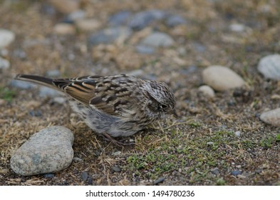 Sparrow Images, Stock Photos & Vectors | Shutterstock