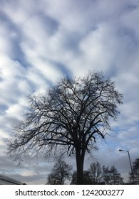 The juxtaposition between the tree and sky is wonderful.