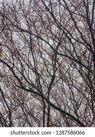 A juxtaposition of branches of leafless winter trees create a pattern against dark cloudy sky in vertical image format.