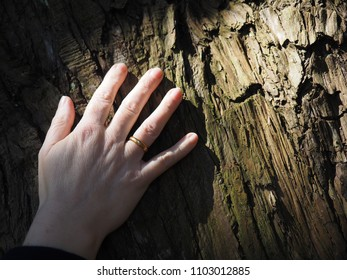 Juxtaposition of a woman's hand with ring against the gnarled bark of a an old tree