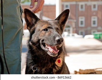 K9 officer next to his handler in an urban environment