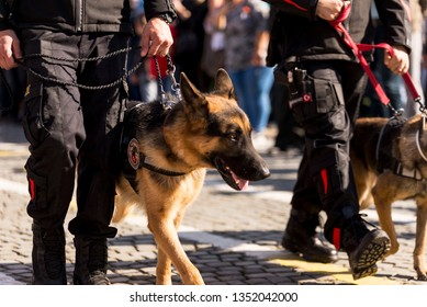 K9 Police dog walking with polices.