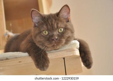 Kaba the Cat
