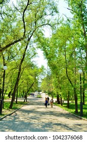 Kabarovsk, Russia - May, 2012: Amursky boulevard at spring time