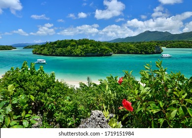 Kabira Bay, the sea of Ishigaki Island in Okinawa, Japan and Hibiscus