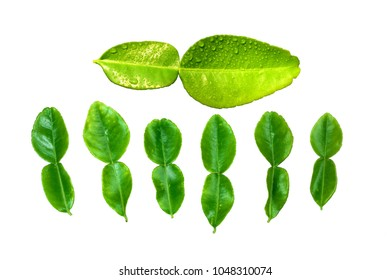 Kaffir lime leaf isolated on white background. / Leaf of bergamot.