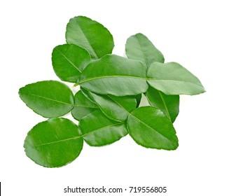 Kaffir lime leaves. isolated on white backgroun