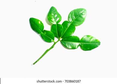 Kaffir lime leaves on white background