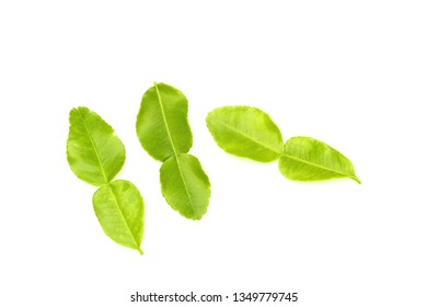 Kaffir lime leaves are tasteless, cold helps to relieve fever, detoxify poisonous wind colic. Fever jab The poisonous abscess inside And phlegm symptoms poisoning
