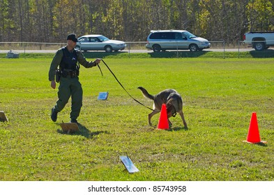 KAGAWONG, ONTARIO, CANADA -OCTOBER 1: Police dog demonstration showing drug sniffing and attack training on October 1, 2011 in Kagawong, on Manitoulin Island, Ontario Canada.
